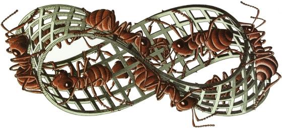 moebius-ants
