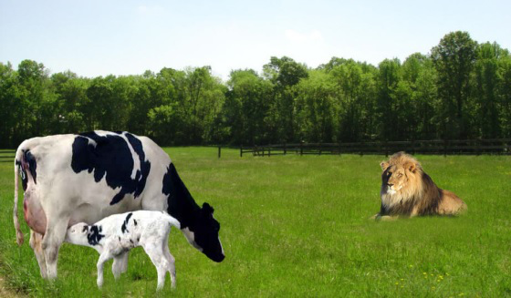 lion-and-cow
