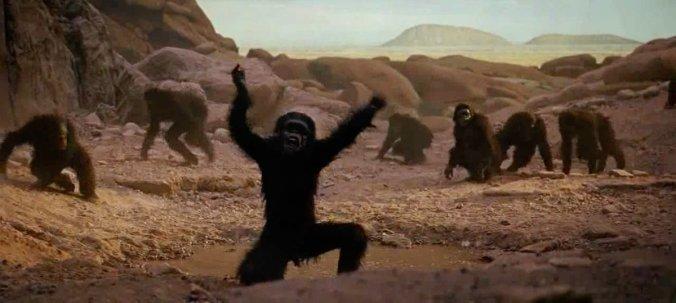 primate.jpg